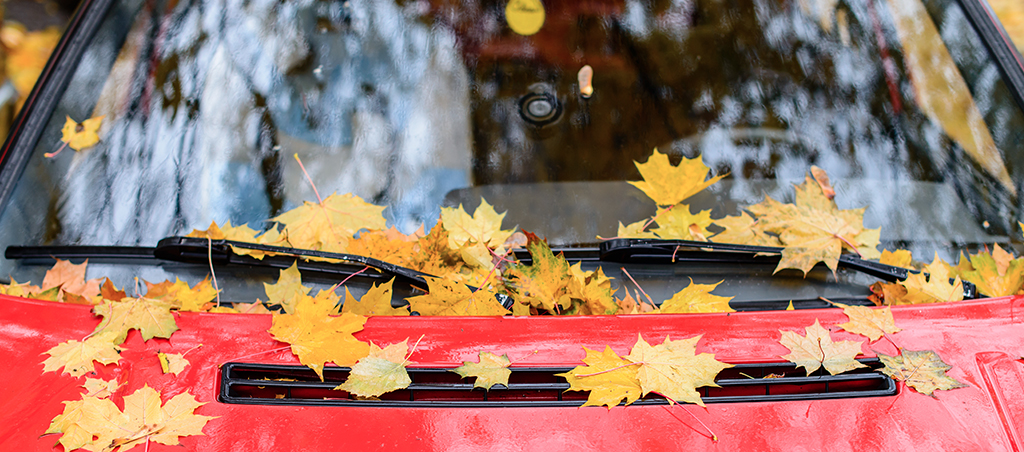 Fall Leaves on Your Vehicle